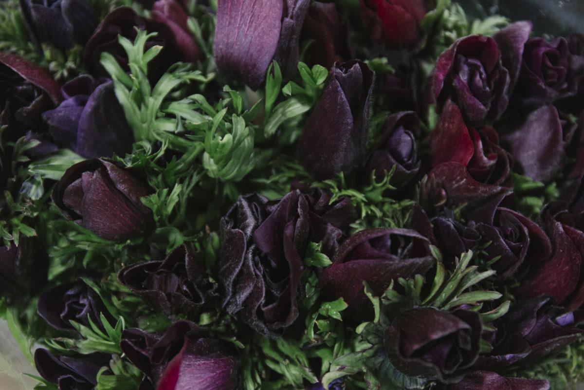 New Covent Garden Flower Market February 2019 A Florists Guide To Anemones Rona Wheeldon Flowerona Mistral Plus Black Anemones At Dg Wholesale Flowers