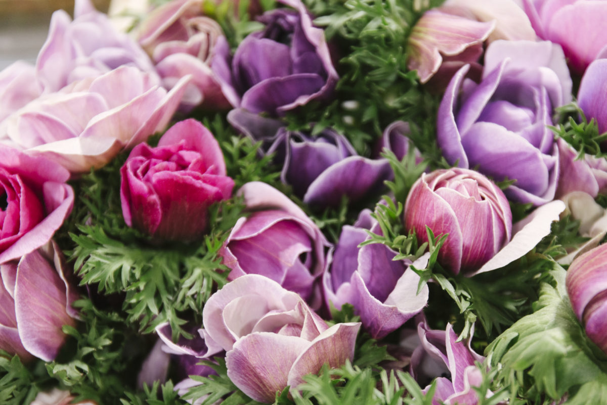 New Covent Garden Flower Market February 2019 A Florists Guide To Anemones Rona Wheeldon Flowerona Mistral Plus Cenere At Bloomfield 1