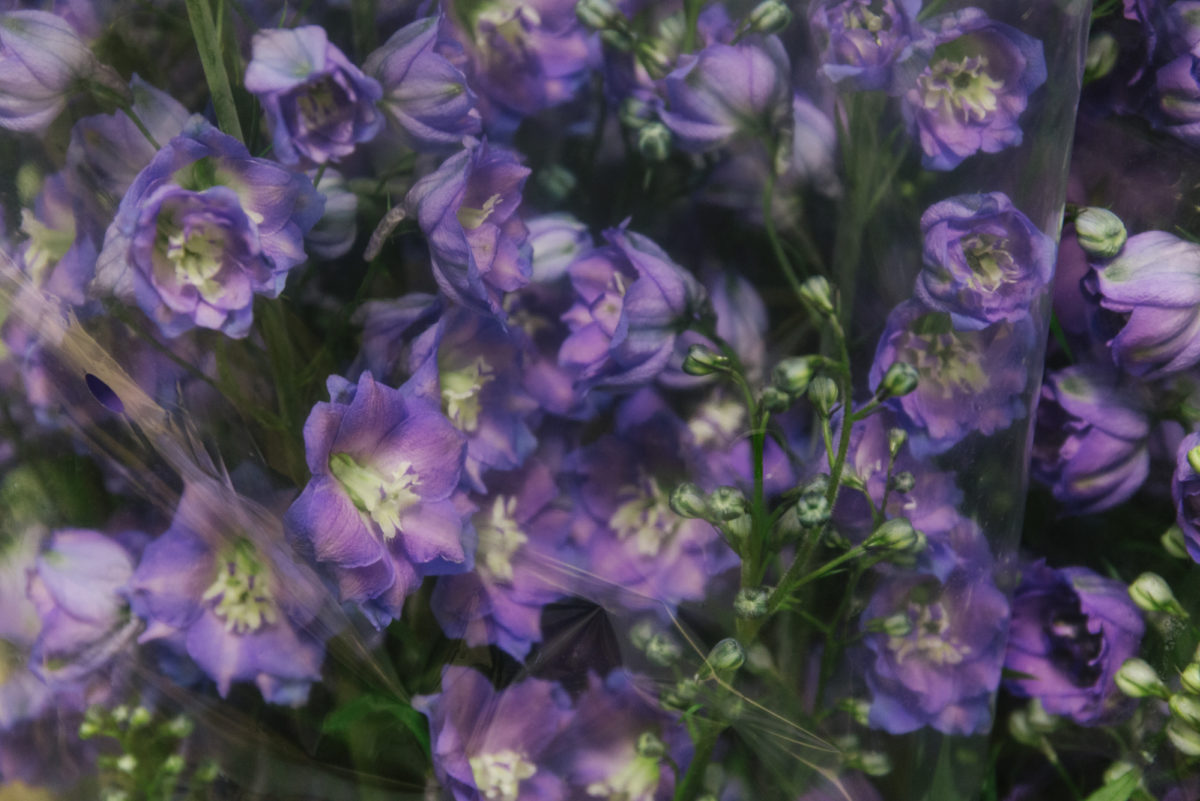 New Covent Garden Flower Market July 2018 A Florists Guide To Ultra Violet Pantone Colour Of The Year 2018 Rona Wheeldon Flowerona Delphinium Delphi'S Jewel At Dennis Edwards Flowers