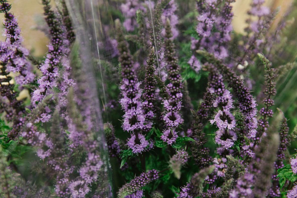 New Covent Garden Flower Market July 2018 A Florists Guide To Ultra Violet Pantone Colour Of The Year 2018 Rona Wheeldon Flowerona Mentha Purple Sensation At Zest Flowers