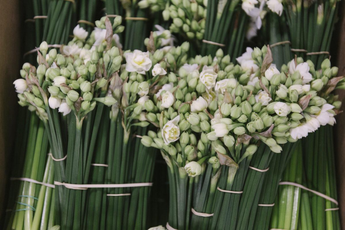 New Covent Garden Flower Market March 2019 In Season Report Rona Wheeldon Flowerona British Narcissus Erlicheer At Pratley