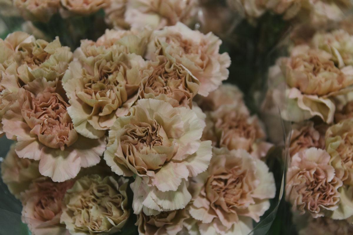 New Covent Garden Flower Market March 2019 In Season Report Rona Wheeldon Flowerona Caramel Dianthus At Bloomfield