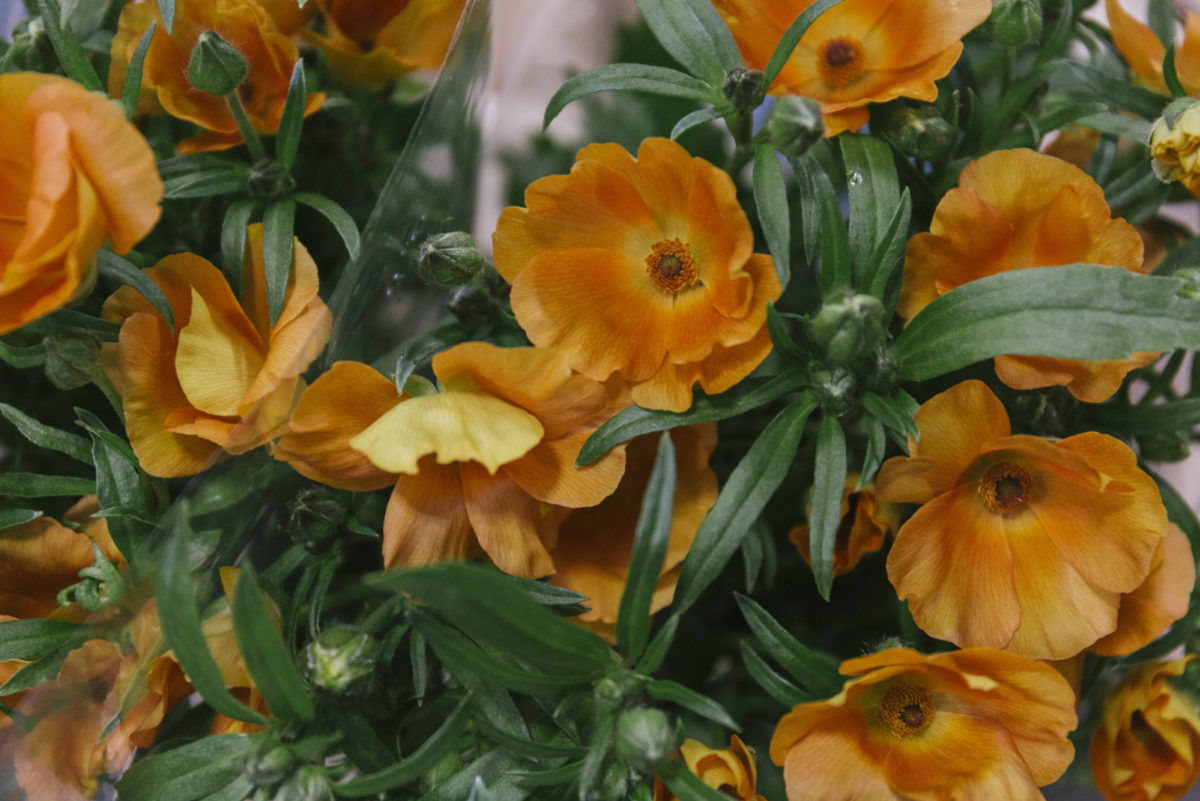 New Covent Garden Flower Market March 2019 In Season Report Rona Wheeldon Flowerona Charis Butterfly Ranunculus At Zest Flowers