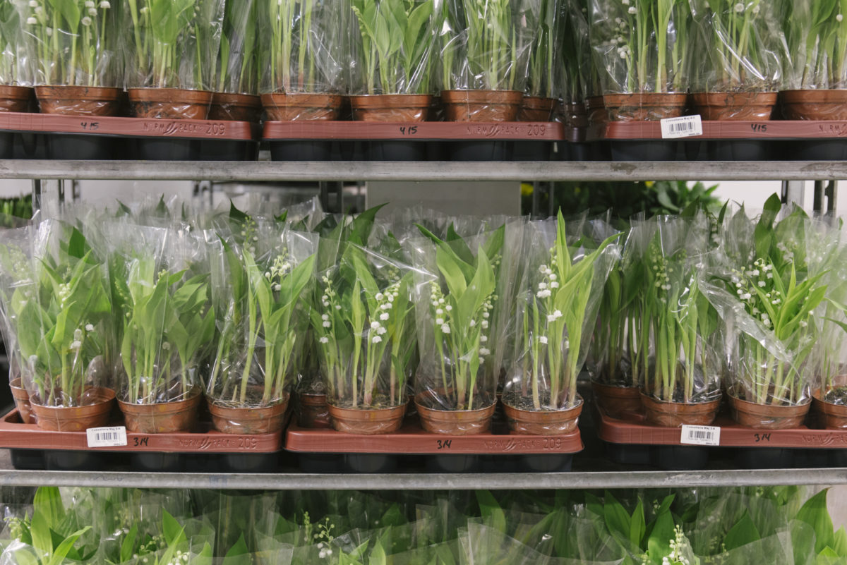 New Covent Garden Flower Market March 2019 In Season Report Rona Wheeldon Flowerona Lily Of The Valley Plants At Evergreen