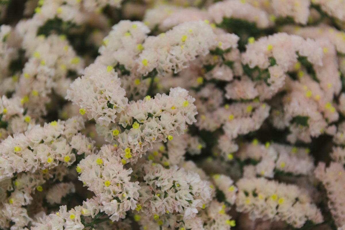 New Covent Garden Flower Market March 2019 In Season Report Rona Wheeldon Flowerona Limonium Honey Apricot