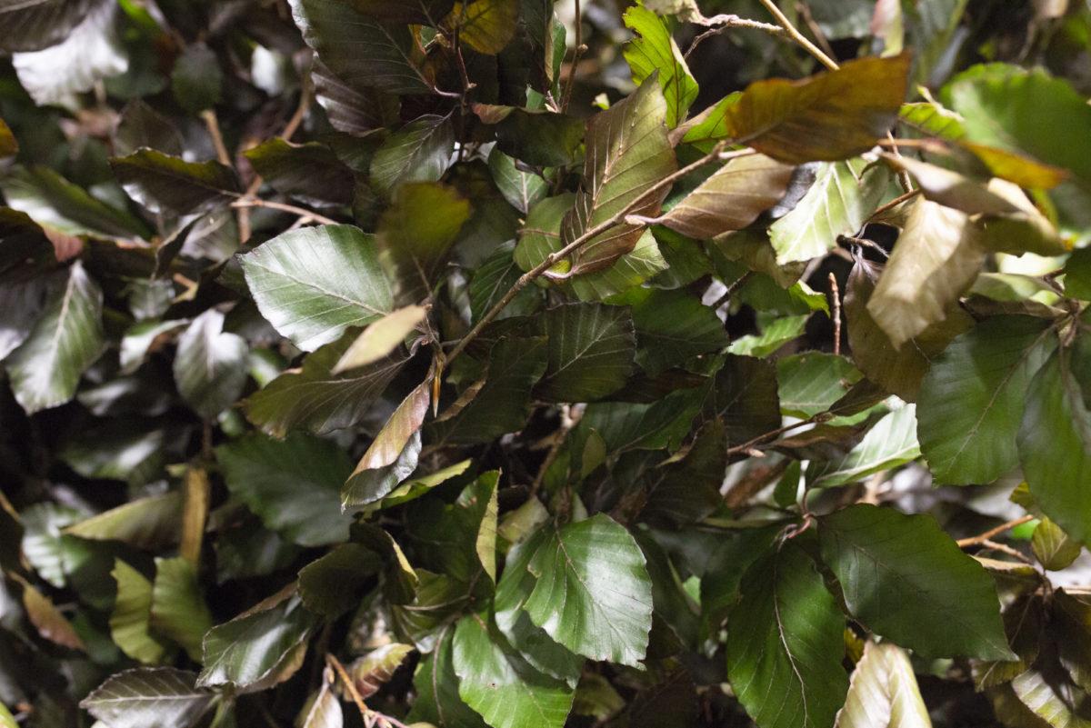The Hottest Flowers Foliage Plants Sundries Trends For 2019 Rona Wheeldon Flowerona New Covent Garden Flower Market Beech