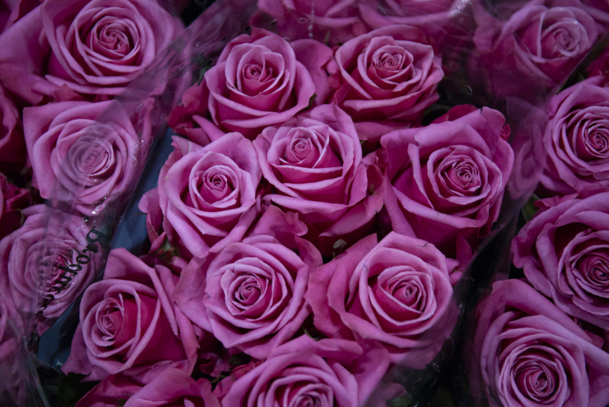 The Hottest Flowers Foliage Plants Sundries Trends For 2019 Rona Wheeldon Flowerona New Covent Garden Flower Market Kiss Me Kate Roses At Dg Wholesale Flowers
