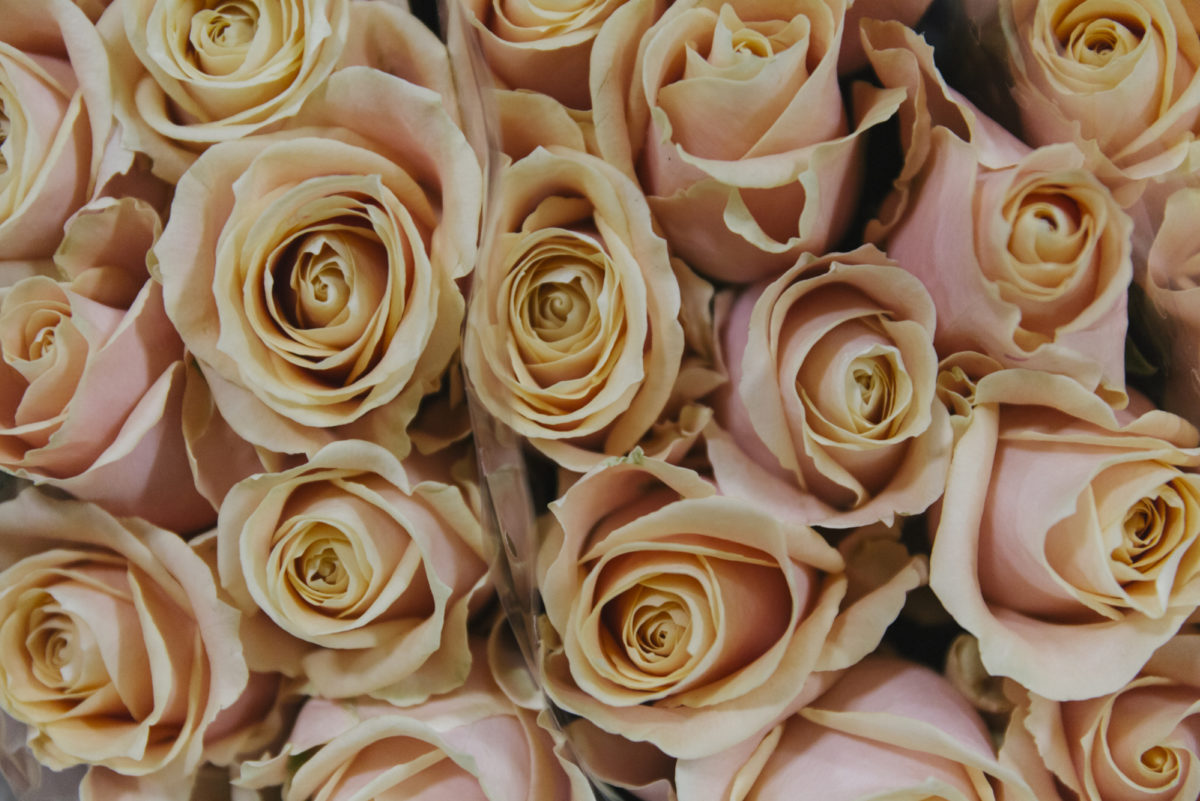 The Hottest Flowers Foliage Plants Sundries Trends For 2019 Rona Wheeldon Flowerona New Covent Garden Flower Market Pearl Avalanche Roses At Dg Wholesale Flowers