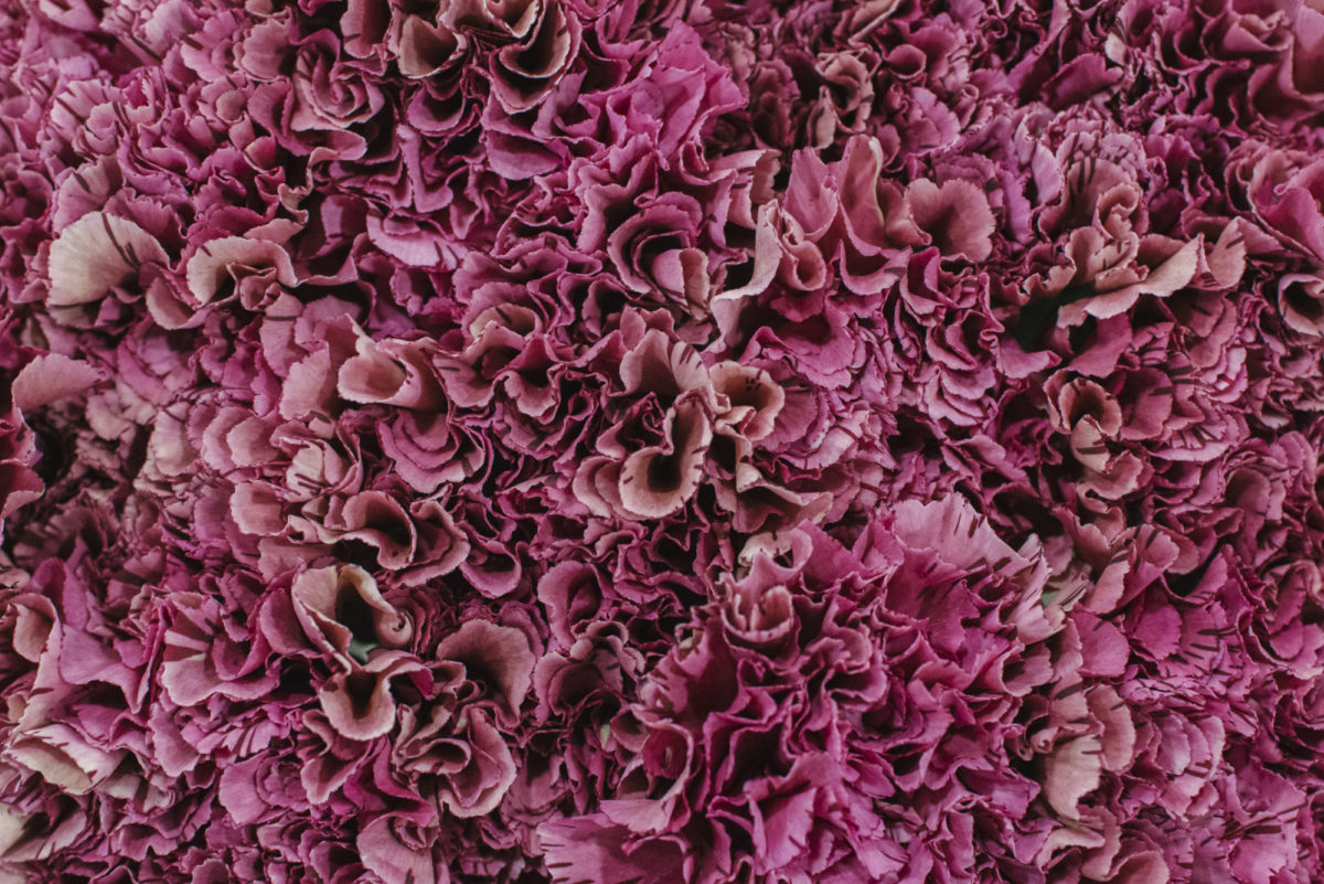The Hottest Flowers Foliage Plants Sundries Trends For 2019 Rona Wheeldon Flowerona New Covent Garden Flower Market Viper Wine Carnation