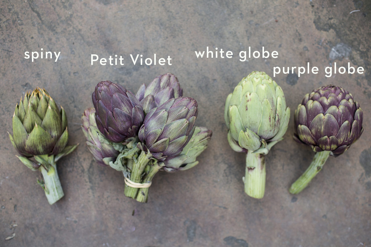 Fruit And Vegetable Market Chefs Guide To Artichokes March 2018 Artichoke Selection Named