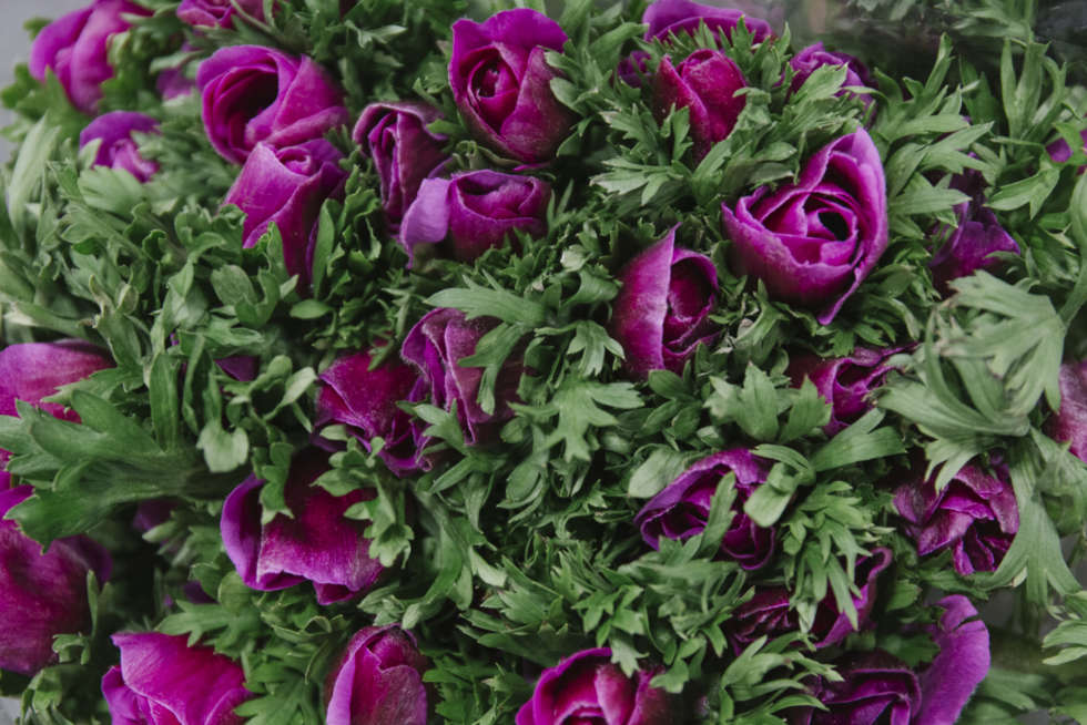 A florist's guide to anemones