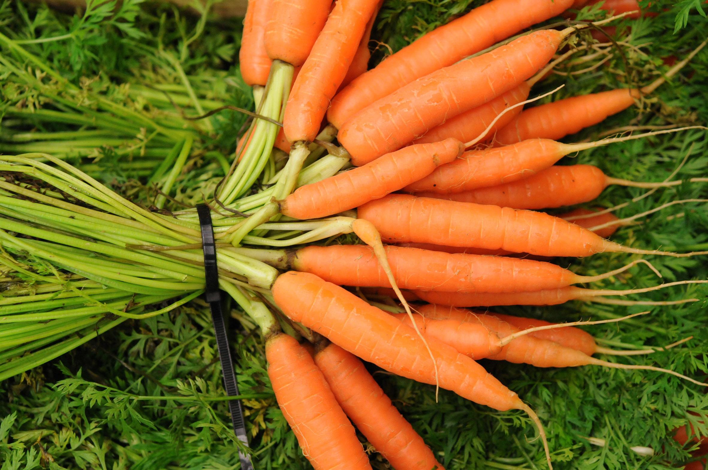 carrots.jpg?mtime=20170922120513#asset:11412