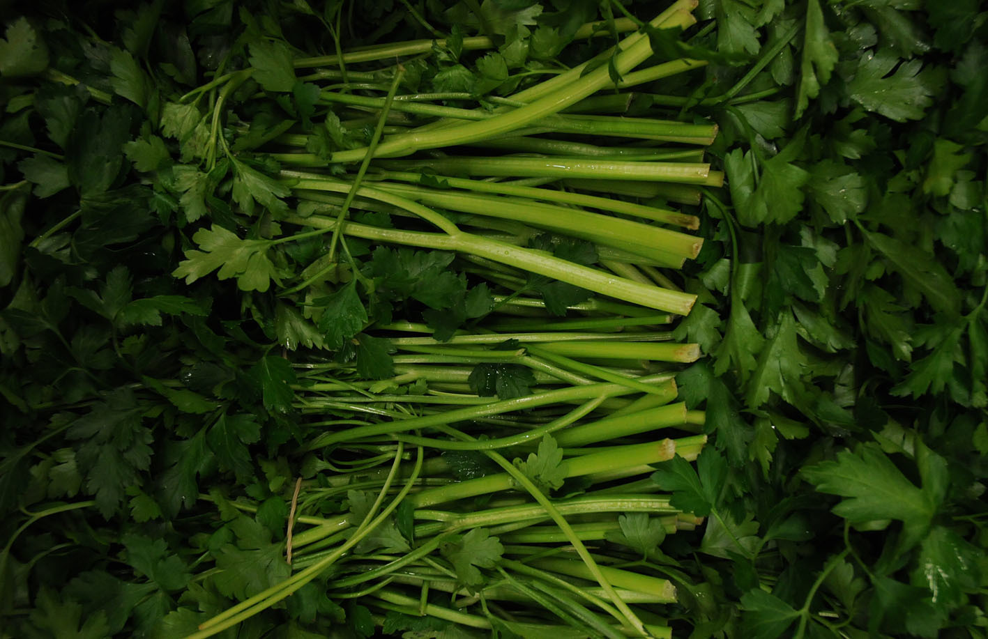 flat-leaf-parsley.jpg?mtime=20170922144309#asset:11545