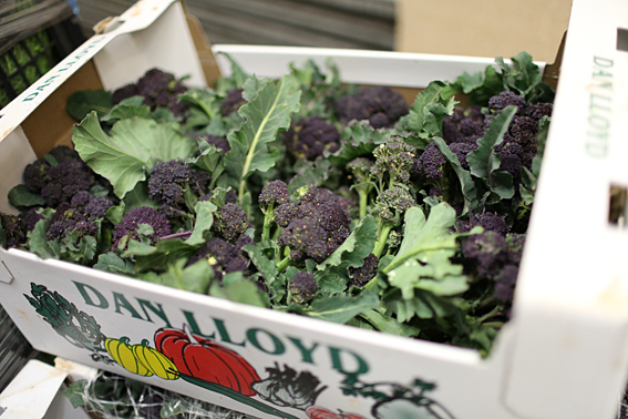 fruit-and-vegetable-market-report-january-2014-purple-sprouting.jpg?mtime=20170922114119#asset:11374