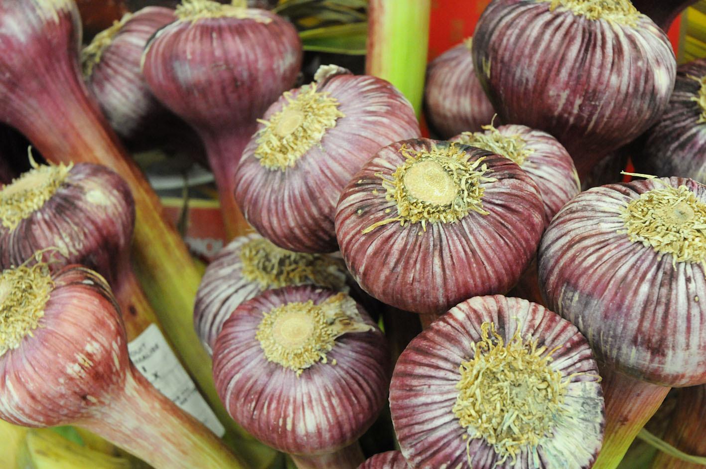 garlic.jpg?mtime=20170922143748#asset:11532