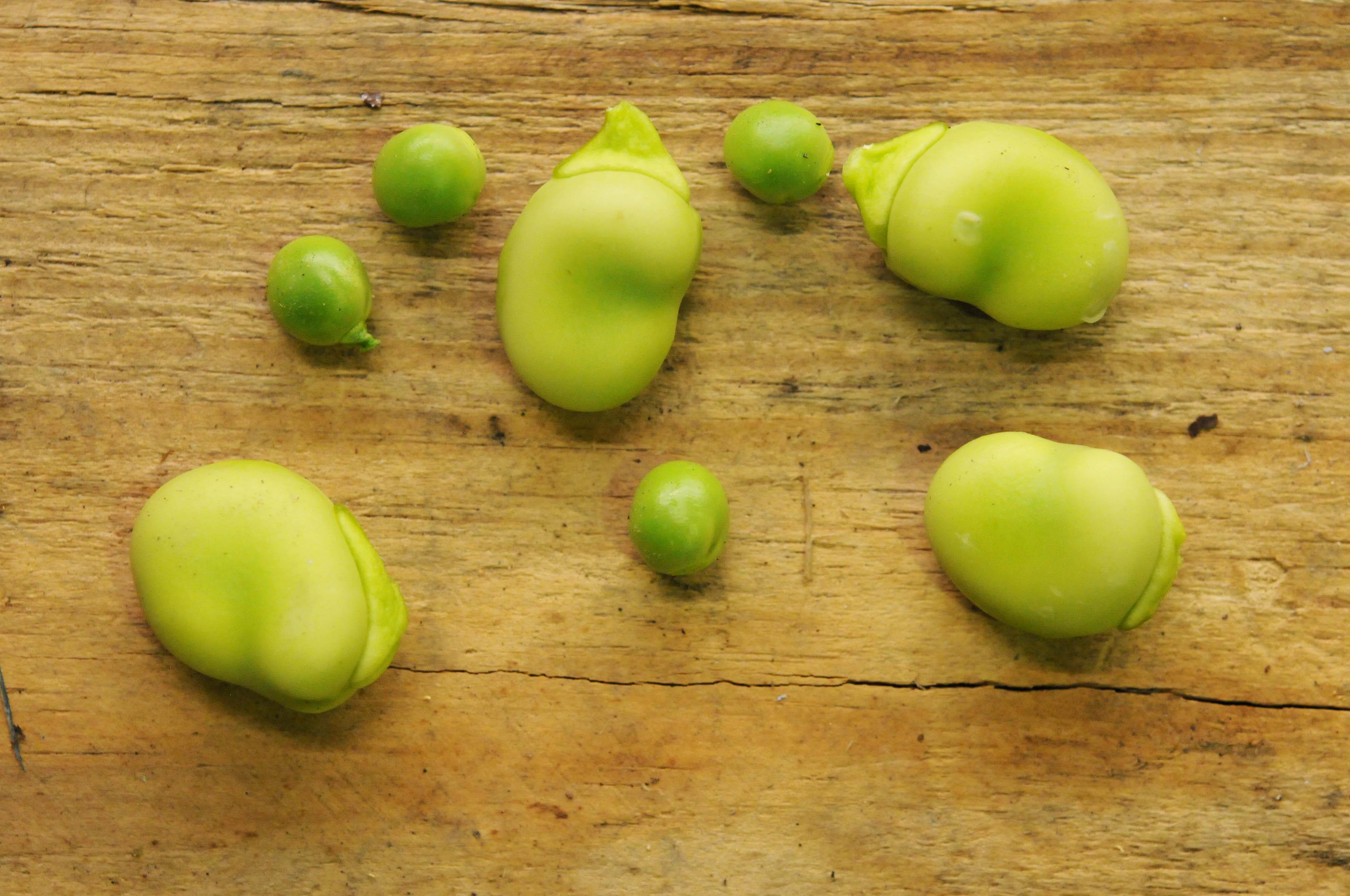 peas-broad-beans.jpg?mtime=20170922135446#asset:11466