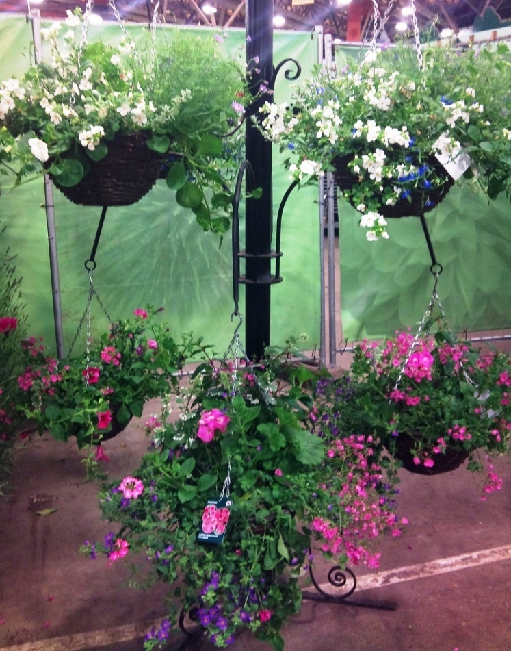 qualitys-hanging-baskets.jpg?mtime=20171003164527#asset:12757
