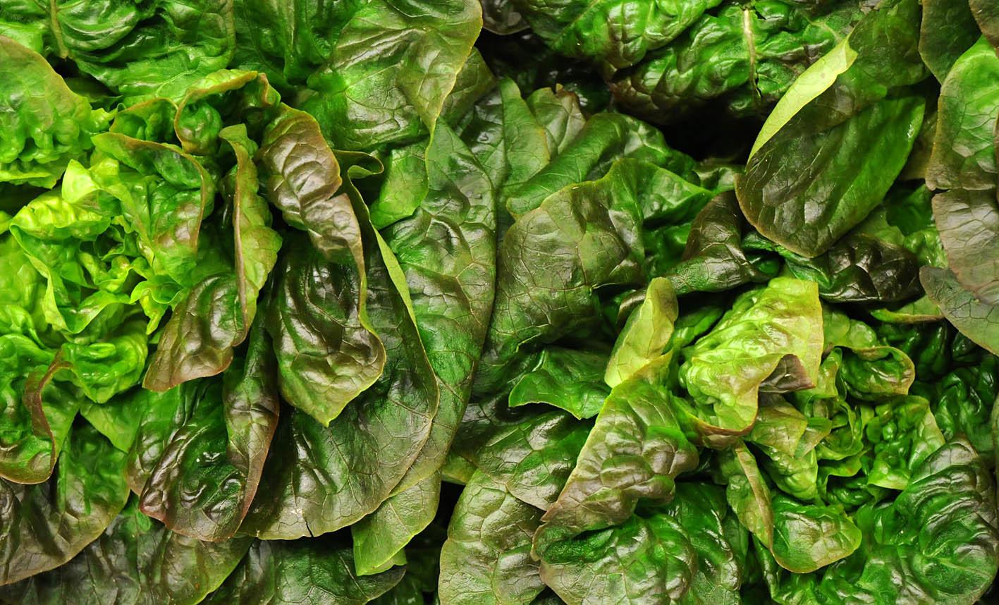red-batavian-lettuce.jpg?mtime=20170922144728#asset:11560
