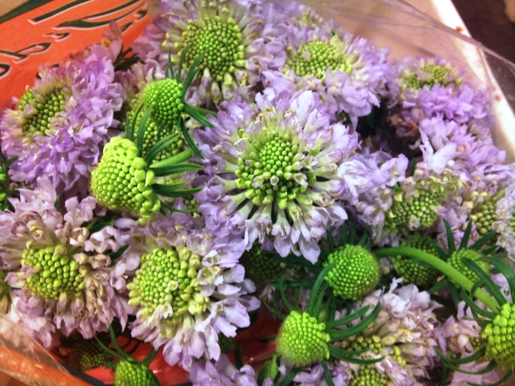 scabious.jpg?mtime=20171003164314#asset:12750