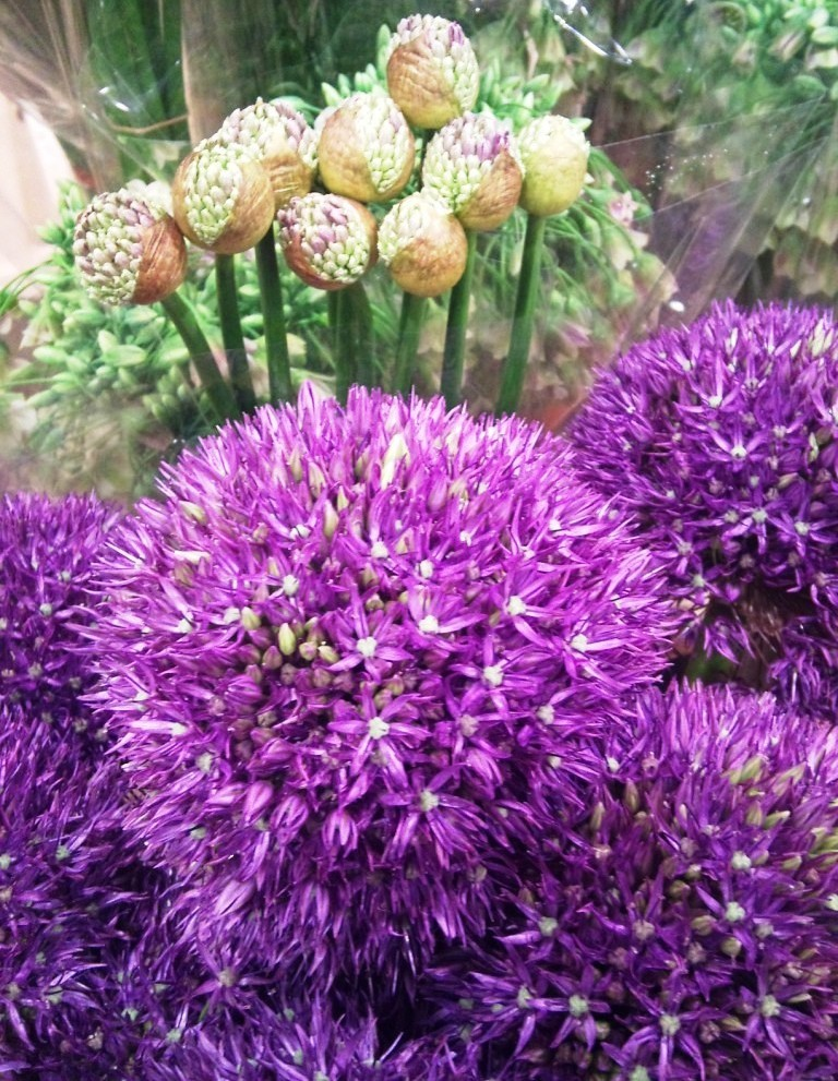 three-kinds-of-allium.jpg?mtime=20171003164116#asset:12741