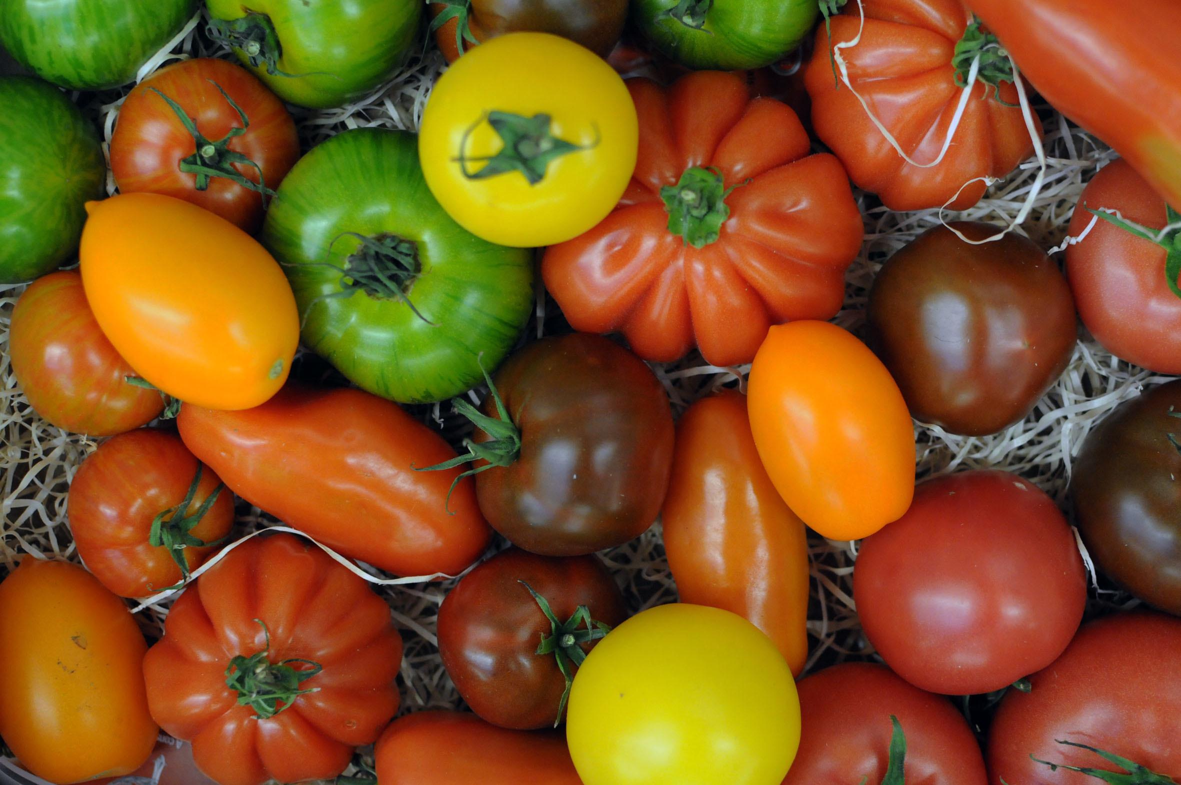 tomatoes_170922_135452.jpg?mtime=20170922135452#asset:11468