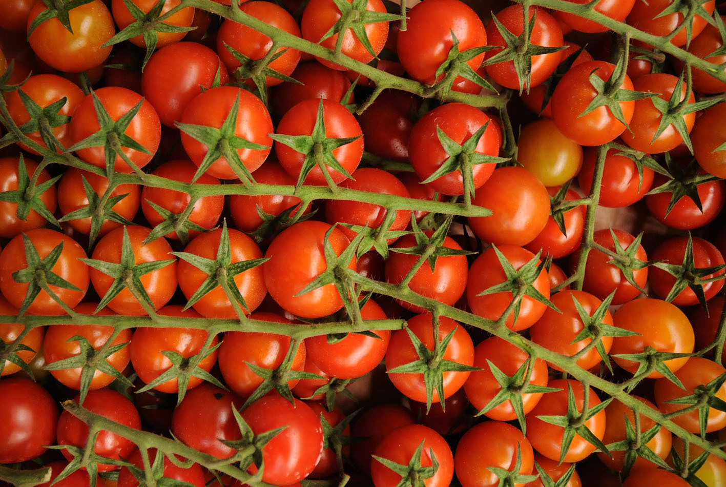 tomatoes_170922_144316.jpg?mtime=20170922144315#asset:11553