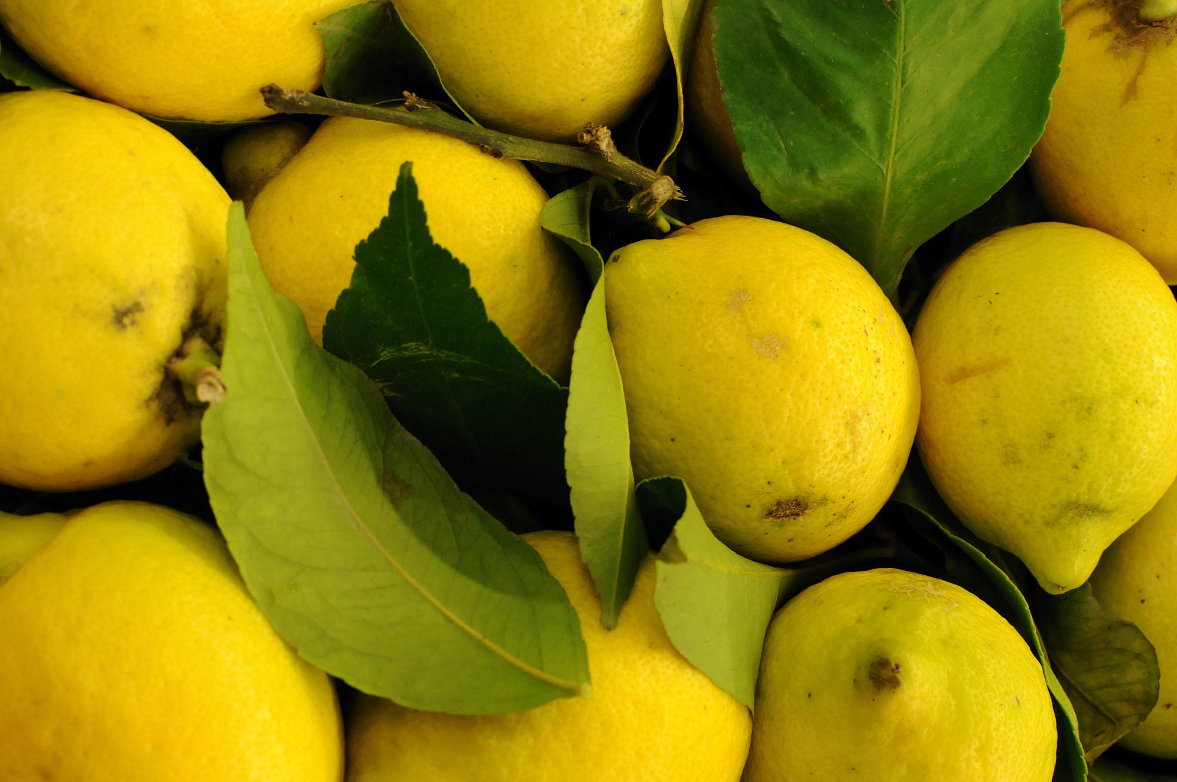unwaxed-lemons.jpg?mtime=20170922142507#asset:11503
