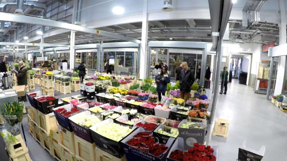 Stories from the market - Repotting the Flower Market
